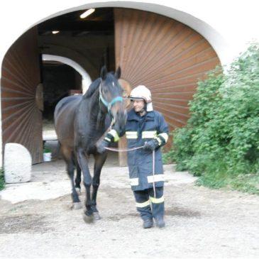 Übung einer Pferderettung im Schloss Mühldorf