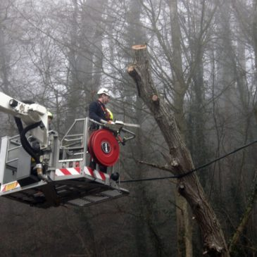 Baum gefährdete die Stromversorgung
