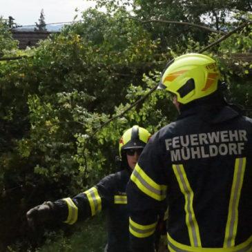 Entwurzelte Bäume auf ein Wohnhaus gefallen